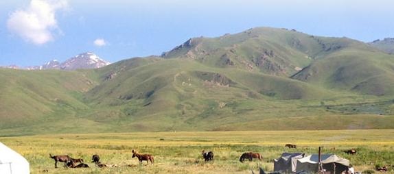 人気の馬プラセンタサプリはキルギス産!国産馬との比較